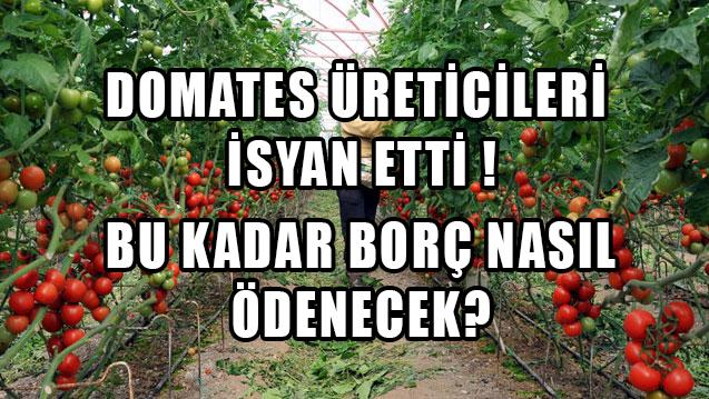 Antalyalı domates üreticilerinden boykot