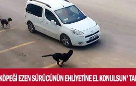 Antalya'da 'Köpeği ezen sürücünün ehliyetine el konulsun' talebi